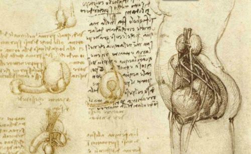 Groß Leonardo Da Vinci Anatomie Skizzen Galerie - Anatomie Von ...