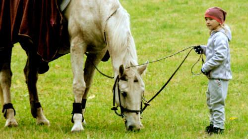Koně umějí komunikovat jako delfíni nebo opice. Změní to přístup k jejich výcviku?