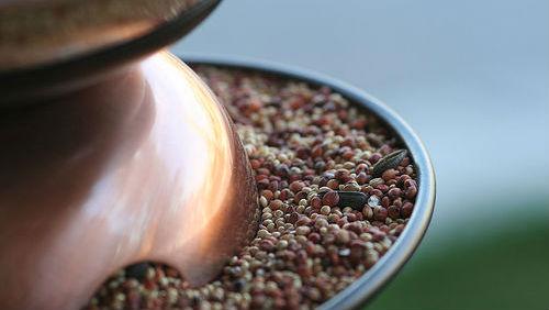 10 nejzdravějších semen na zemi