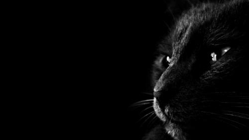 Kočka, náš tajemný přítel